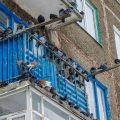 كيفية تخويف الحمام من السقف. كيفية دفع الحمام بشكل صحيح وموثوق قبالة الشرفة