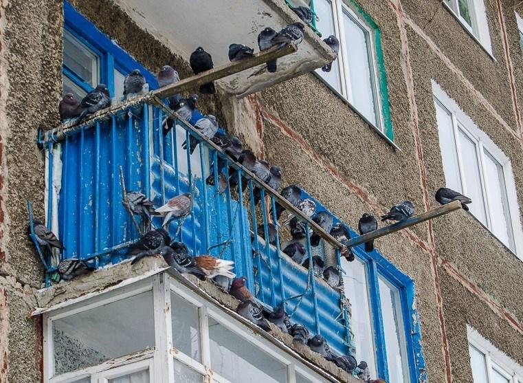 طريقة تخويف الحمام من السقف. طريقة دفع الحمام بشكل صحيح و موثوق قبالة الشرفة