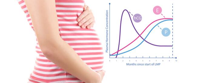 جدول نسبة هرمون الحمل: ماذا تعني الأرقام  و يب طب