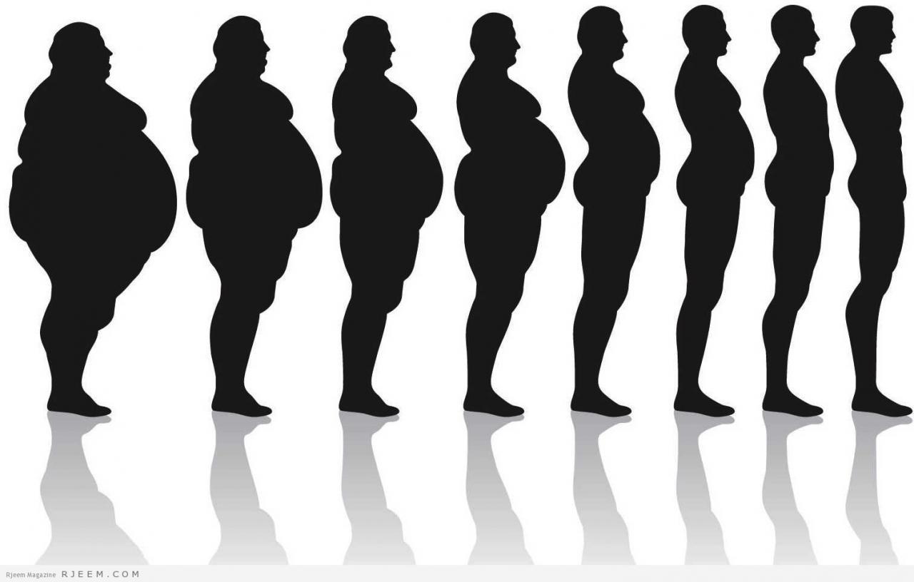 الدهون  نوعيات الدهون الغذائية و اهميتها لصحة الانسان  مجلة رجيم
