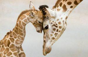 صورة جون j n عالم الحيوان بالصور