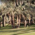 حديقة السلام في مدينة الرياض