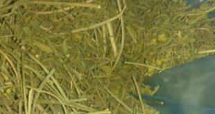 تجارب عشبة القشعة جابر القحطاني - موسوعة