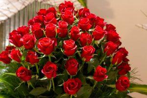 الم ض الي م مع شذى الورد